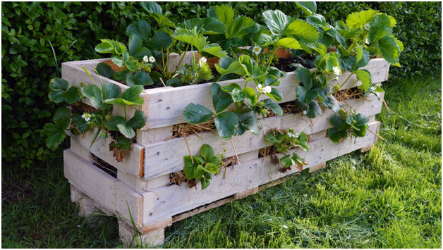wooden pallet as a planter